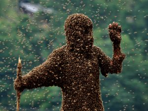 What if the bees buzz off, or even if they don't?